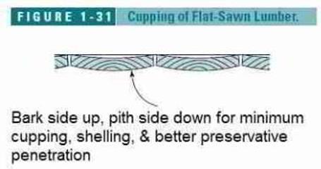 Figure 1-31: Cupping of flat sawn lumber (C) Wiley and Sons, S Bliss