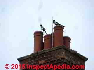 Magpies atop multiple chimney pots close together, Oxford, UK (C) Daniel Friedman
