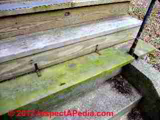 Aglae slip hazard on wood steps (C) Daniel Friedman