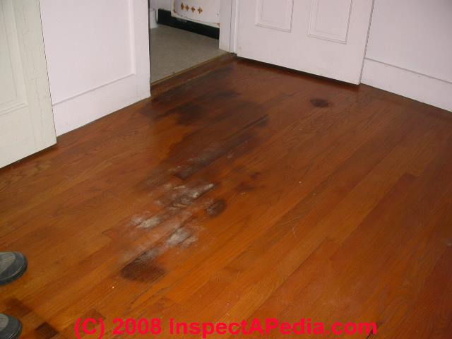 Pet Stains Amp Marks In Buildings A Diagnostic Guide To