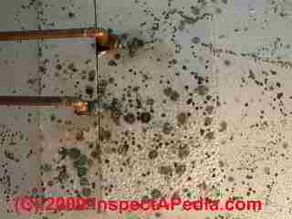 Black mold on drywall (C) Daniel Friedman