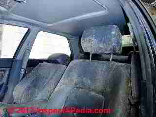 Car mold catastrophe (C) Daniel Friedman