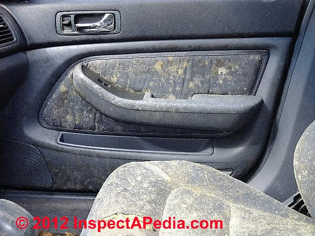 Photographic Guide To Mold Mold Growth On Or In Cars Rvs