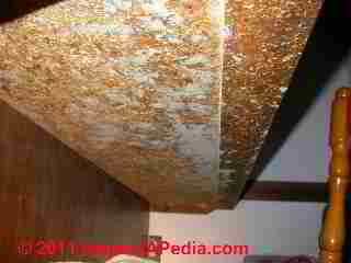 Photo of mold hidden on underside of kitchen counter  (C) Daniel Friedman