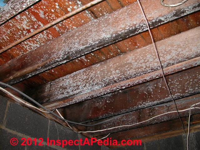 approaches to mold cleaning systems what to use to get rid of mold