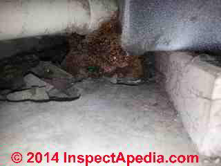 Indoor fungal growth at foundation & on PVC piping (C) InspectApedia