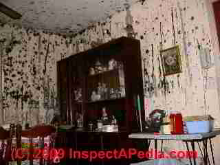 Mold catastrophe in unattended home (C) Daniel Friedman