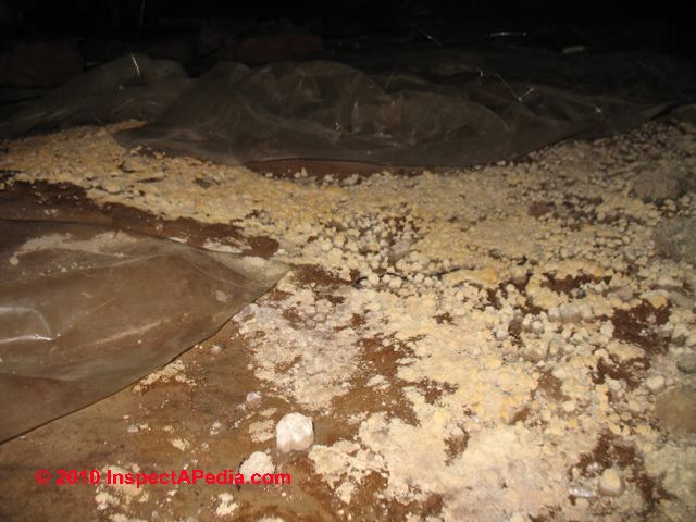 of mold on dirt in crawl spaces basements floors looking for mold