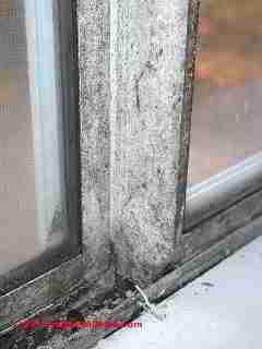 Photo of mold on window muntins  (C) Daniel Friedman