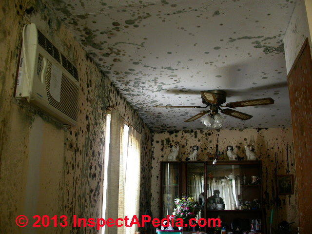 how to find mould in your house