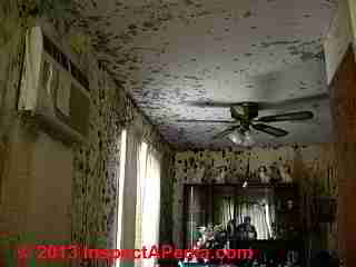 Photograph of severe indoor mold contamination (C) Daniel Friedman