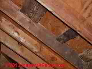Dark stains on rafters in an attic - is this mold? (C) 2013 InspectAPedia