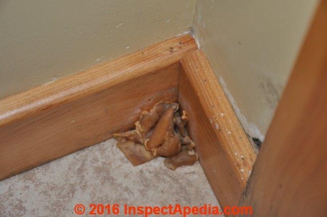 Floor trim mushroom mold (C) InspectApedia - Mold Commonly Found In Indoor Dust Samples, Mold On Plumbing