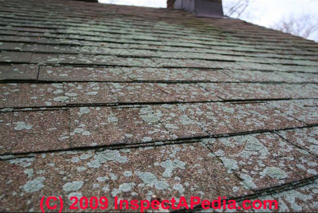 Lichens Damage On Roofing Surfaces