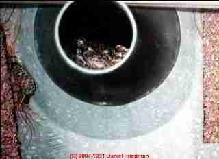 Photograph of a plumbing vent blocked by a visiting frog