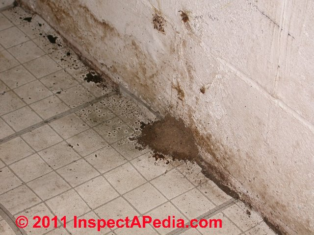 Brown Mold In Basement Pictures To Pin On Pinterest