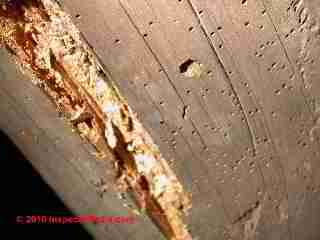 repair insect damage in log homes