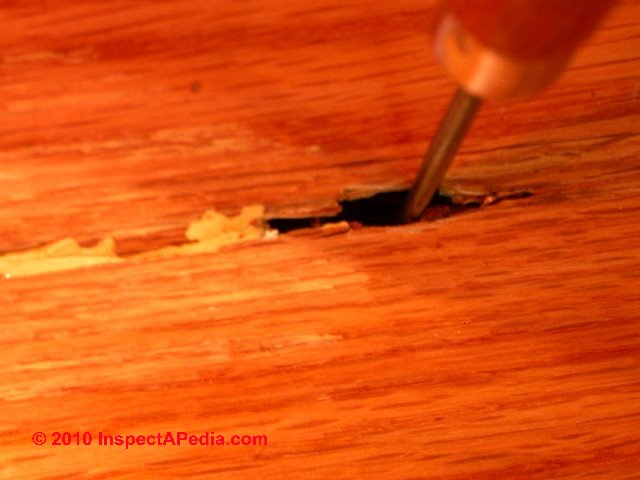 Termite inspection using invasive methods probing when for Wood floor hole filler