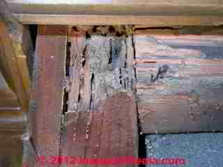 Photograph of  termite damage to the floor structure of a 1920's home.