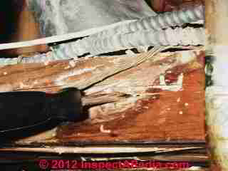 Termite damaged ceiling joist (C) Daniel Friedman