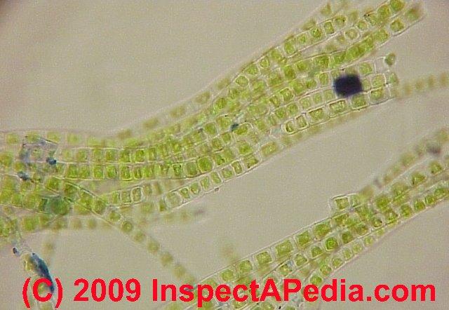 Identify Roof Algae & Lichens: Photo-guide to ...