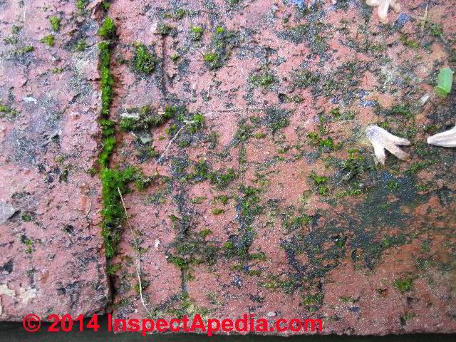 Beautiful ... Moss On Brick Patio Surface (C) Daniel Friedman