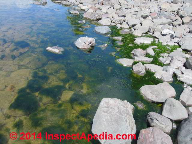 Septic Drainfields How To Diagnose A Clogging Failure Of