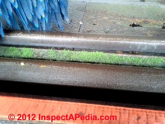 Car Wash Algae Growth On Cleaning Equipment