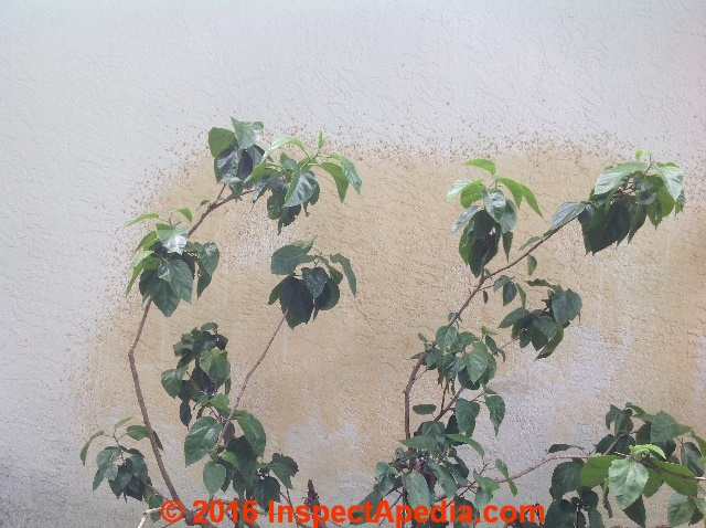 Yellow Pollen Stains On Exterior Stucco From Nearby Hibiscus Flowers C Inspectapedia Gc Remove