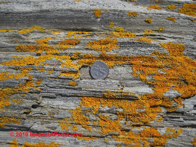 Lichens Algae Moss Growth On Stone Surfaces How To