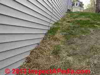 Vinyl siding buried by backfill invites wood destroying insects (C) Daniel Friedman