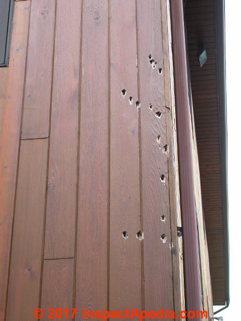 Clean Off Amp Prevent Bird Droppings Amp Stains On Buildings