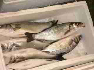 Fish from simplyseafoods.com