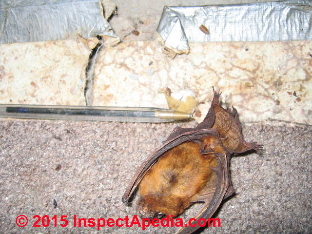 Mice Making Noise In Ceiling Shelly Lighting