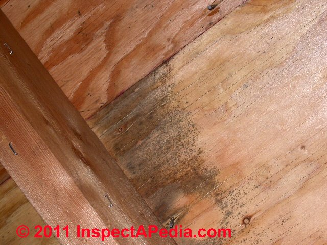 How To Tell If There Is Mold Under Wood Floor TheFloorsCo