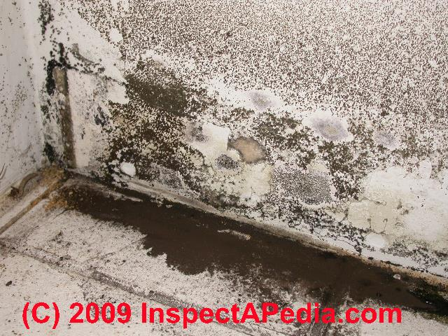 Bathroom Mold Cleanup How To Remove Bathroom Mold Amp How