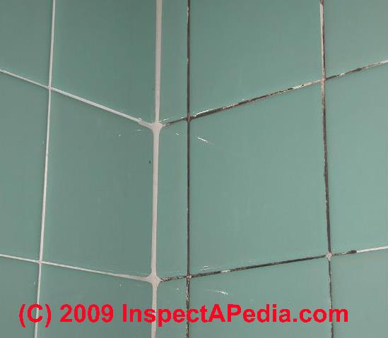 Black mold on bath tile grout (C) Daniel Friedman