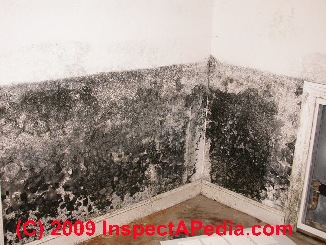 Black mold on a building interior wall (C) Daniel Friedman & Ozone mold treatment Advice: Warnings about Relying on Ozone to ...