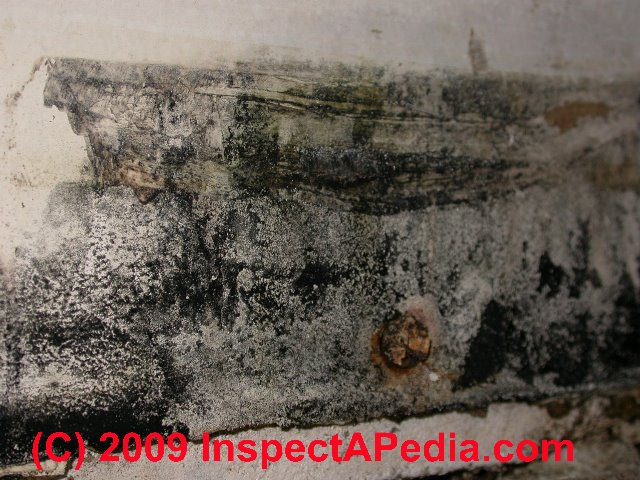What does black mold look like - toxic black mold growth