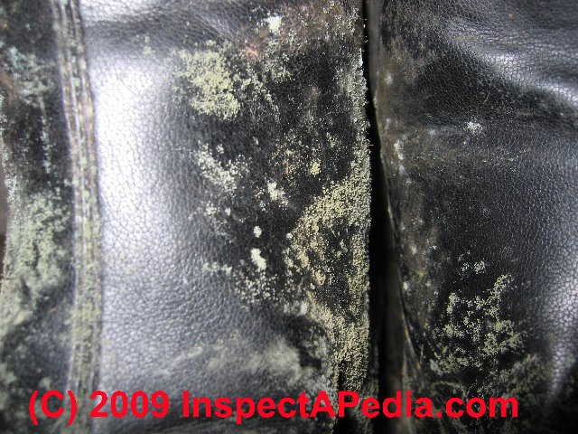 Mold Growth On Leather Shoes