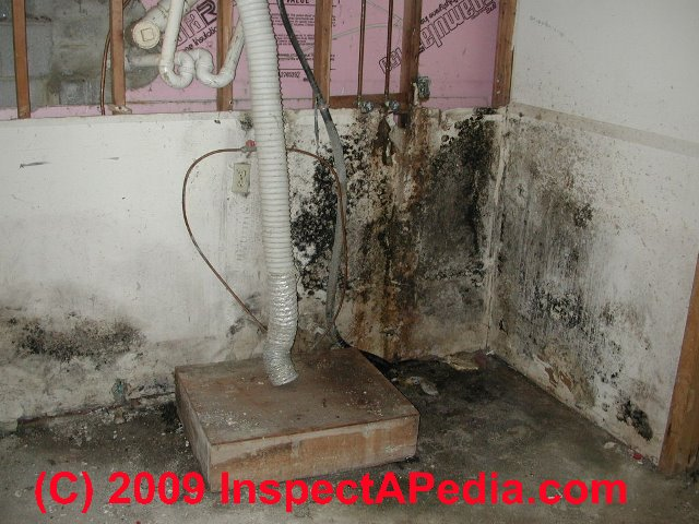 What Does Black Mold Look Like These Black Mold White