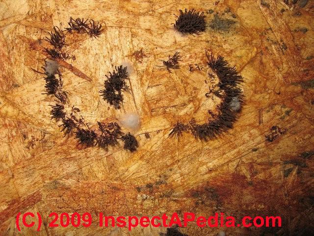 Brown Mold Growth Indoors C Daniel Friedman