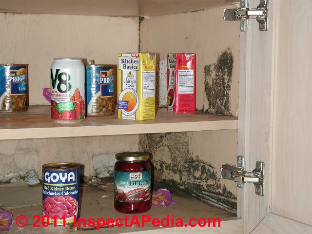 Salvage Building Contents How To Sort Amp Clean Moldy Or