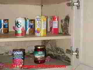 Photo of mold on walls and shelves in kitchen pantry (C) Daniel Friedman