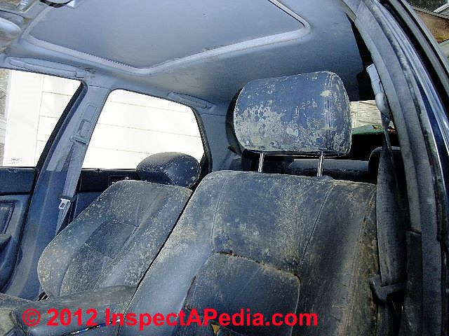 car mold jungle identification of molds in a very moldy car severely mold contaminated car. Black Bedroom Furniture Sets. Home Design Ideas