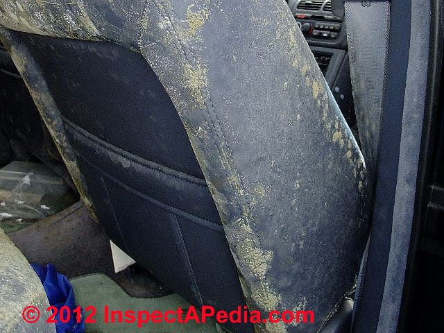 How Do You Get Rid Of Mold In Car Carpet Review Home Co