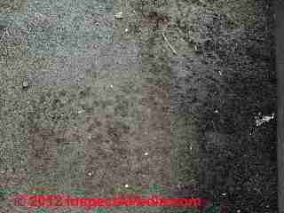 Mold contamination of automobile carpeting (C) Daniel Friedman