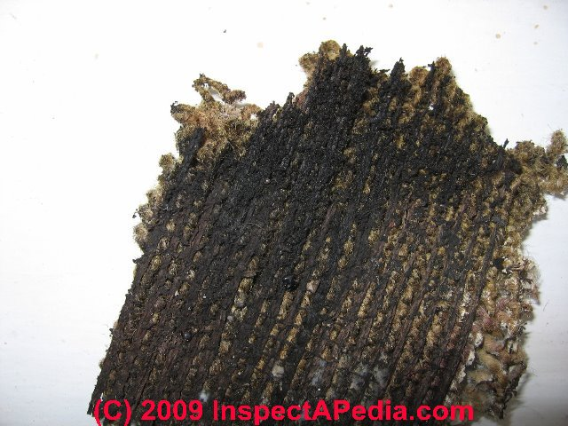 Carpet mold contamination test: How to Find and Test for ...