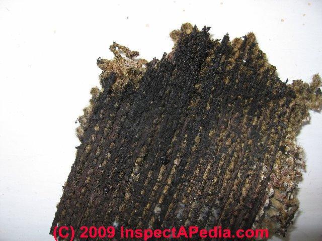 Wet Carpet Mold Smell MenzilperdeNet