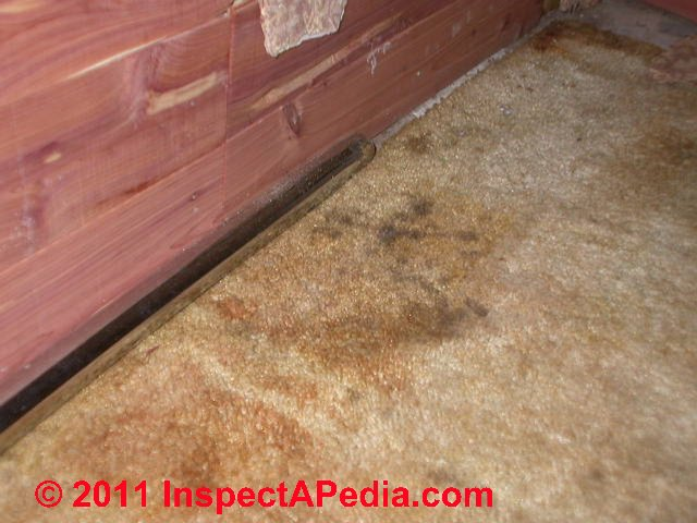 Photo Of Mold On Cedar Lining Of A Closet (toxic) (C) Daniel